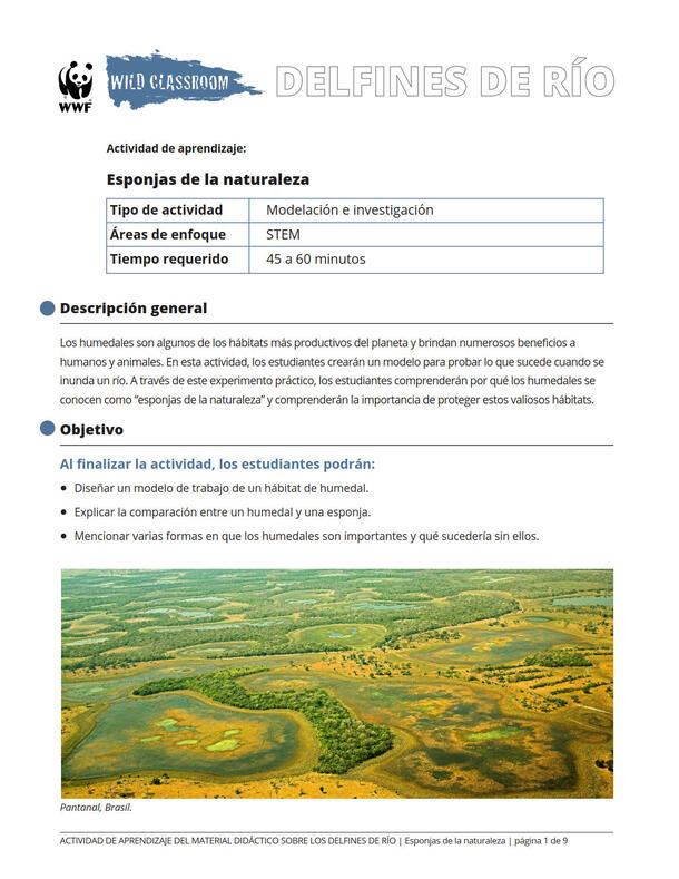 Esponjas de la naturaleza Brochure