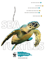 Full Sea Turtle Toolkit Brochure