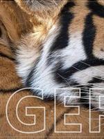 Tiger Classroom Presentation Brochure
