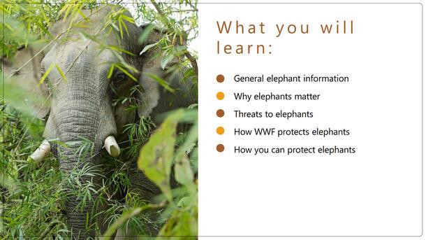 Elephant Classroom Presentation  Brochure