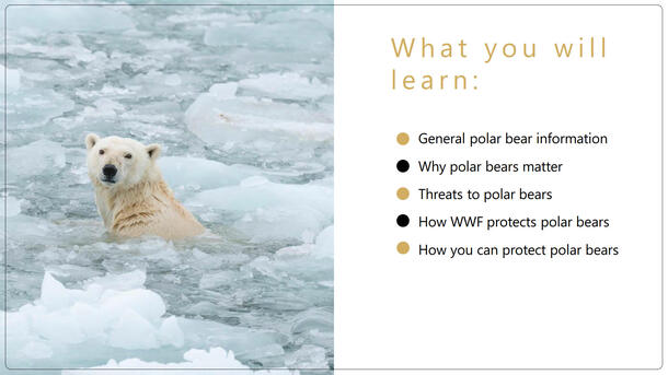 Polar Bear Classroom Presentation Brochure