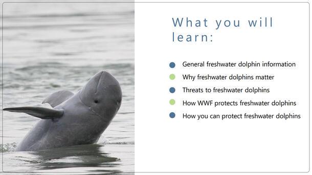 Freshwater Dolphin Classroom Presentation Brochure