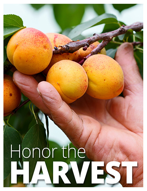 Honor The Harvest Poster Brochure