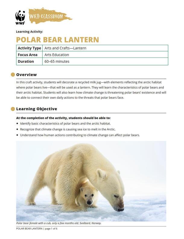 Polar Bear Lantern Brochure