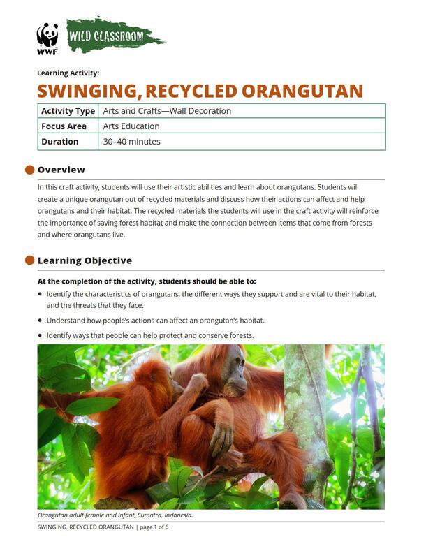 Swinging Orangutan Brochure