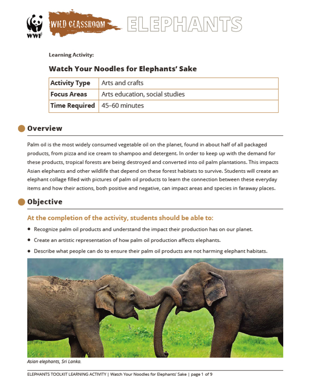 Watch Your Noodles for Elephants' Sake Brochure