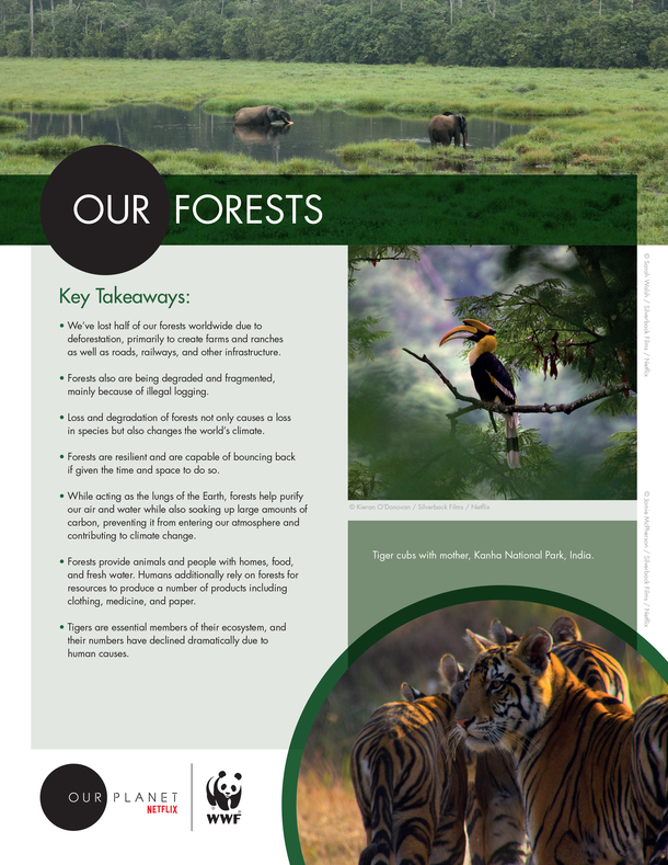 Our Forests Brochure