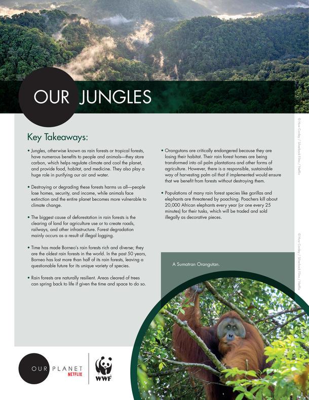 Our Jungles Brochure