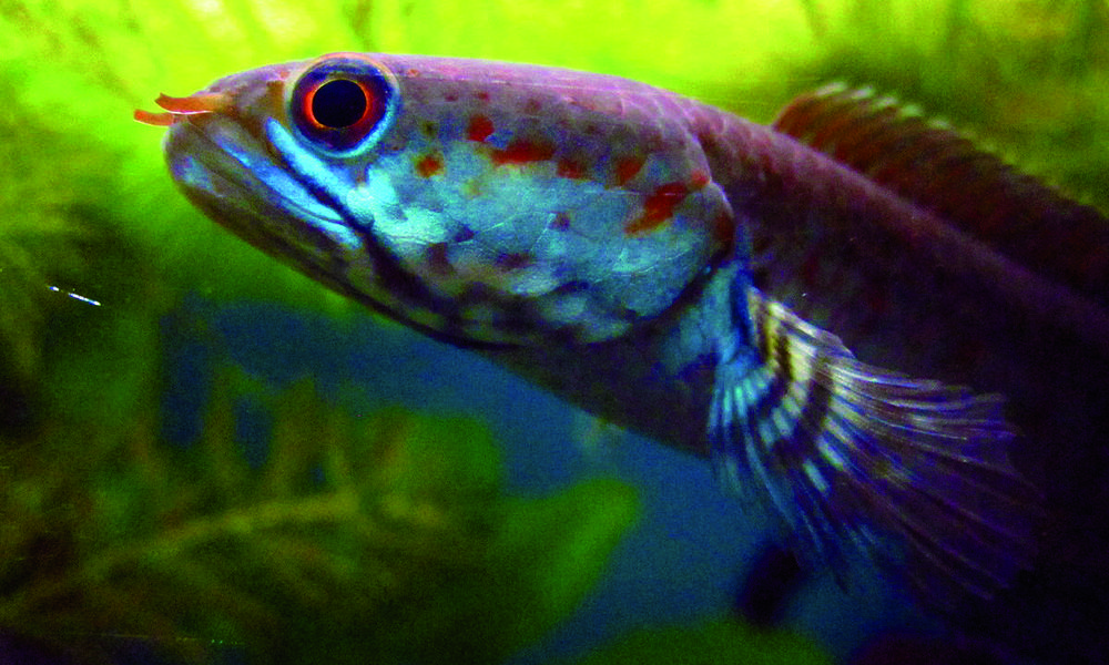 Hundreds of new species discovered in the eastern for New fish discovered