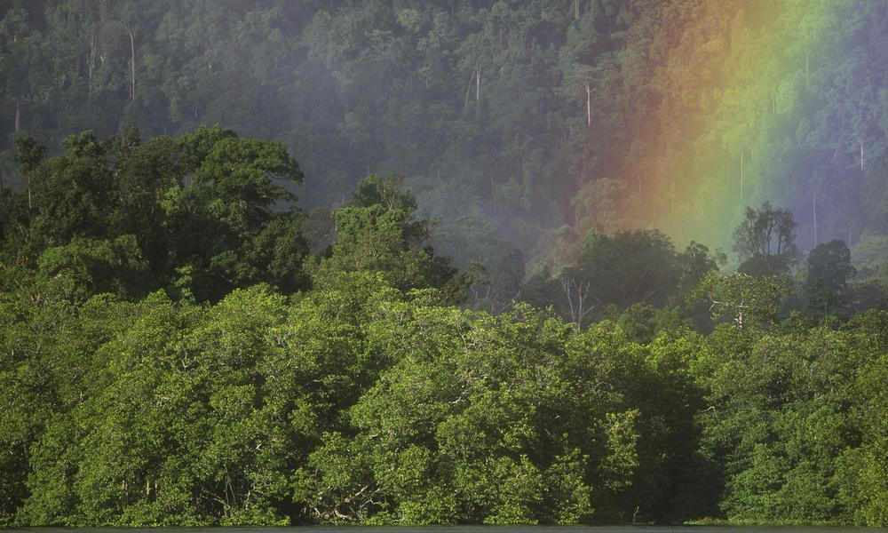 Deforestation   Threats   WWF
