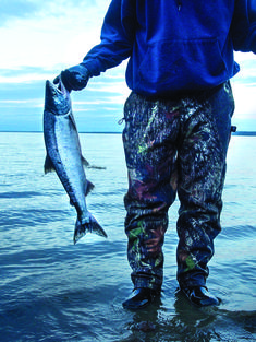 Man holding two sockeye salmon