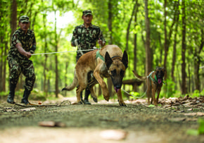 Sniffer dogs in Nepal
