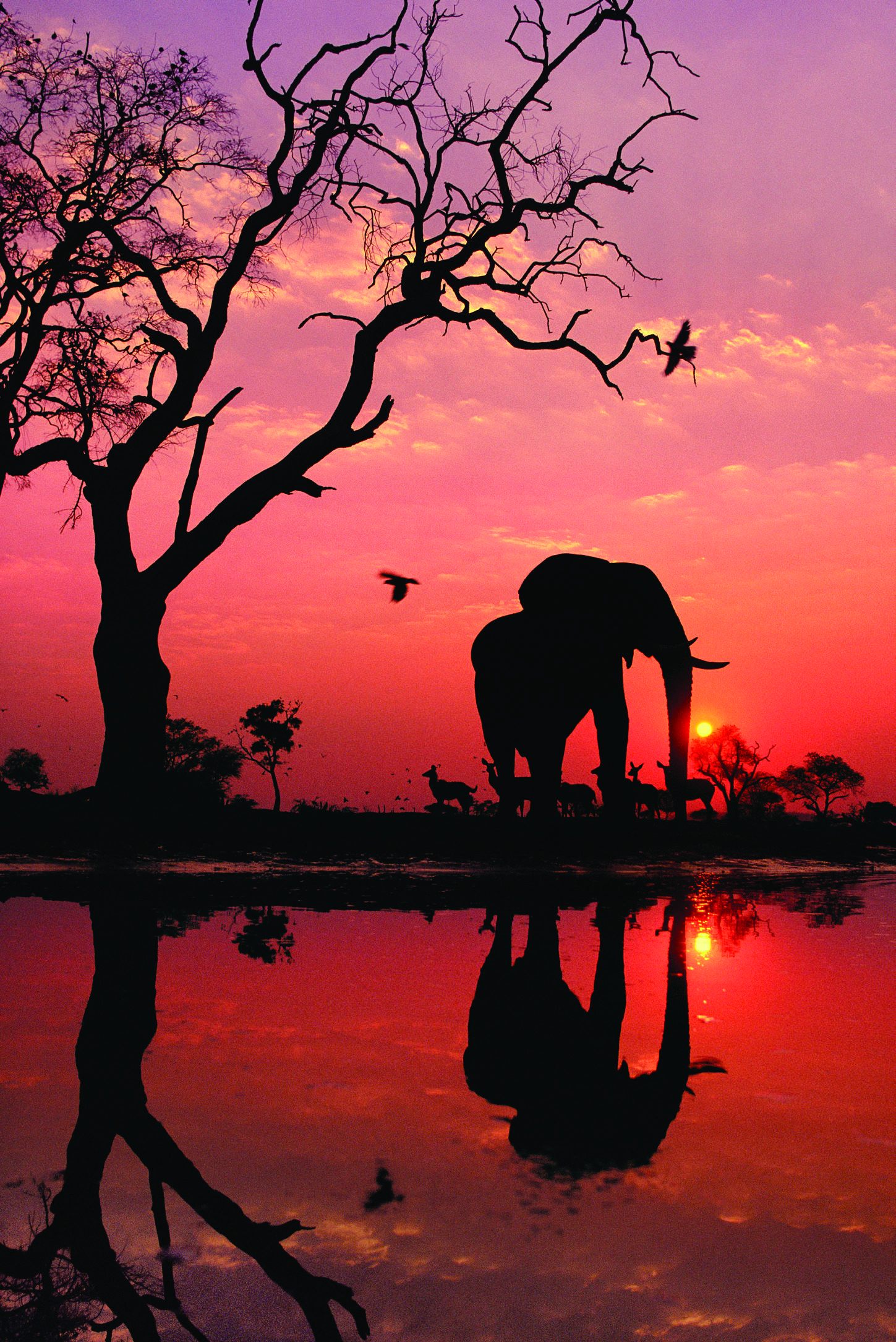 African elephant silhouetted by the sunrise