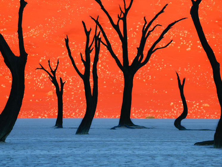 Ghost Trees in Namibia
