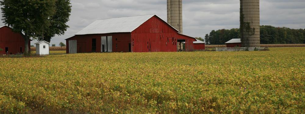 Soy farm in rural Ohio