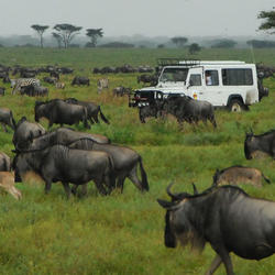 African_tour_07.30.2012_help