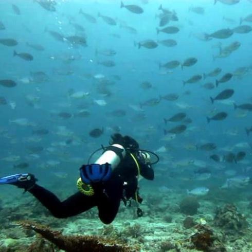 Gabby diving
