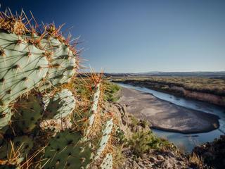Cactus and Rio Grande