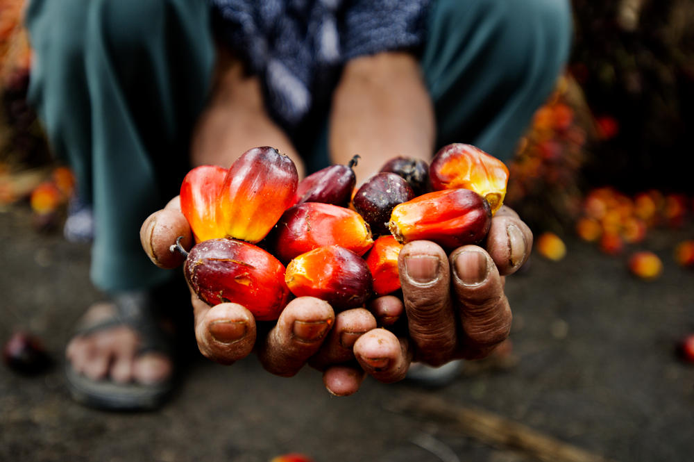 palm oil close up