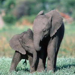 2015-11_drtv-elephant