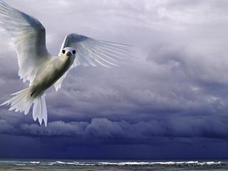 white tern flying over the ocean