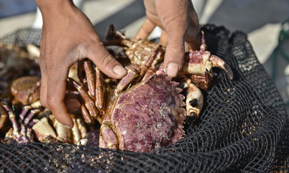 a crab prepped for cooking