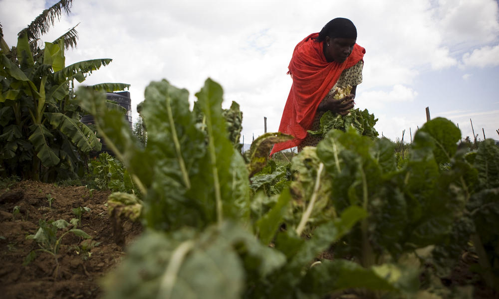 farming in kenya