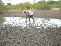 Coastal-east-africa-what_wwf_is_doing_adapting_to_climate_change