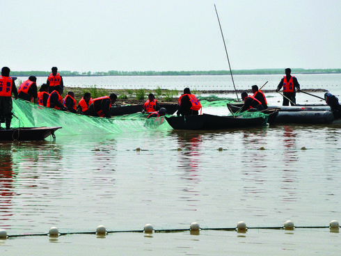 The team catches a finless porpoise in Poyang Lake.