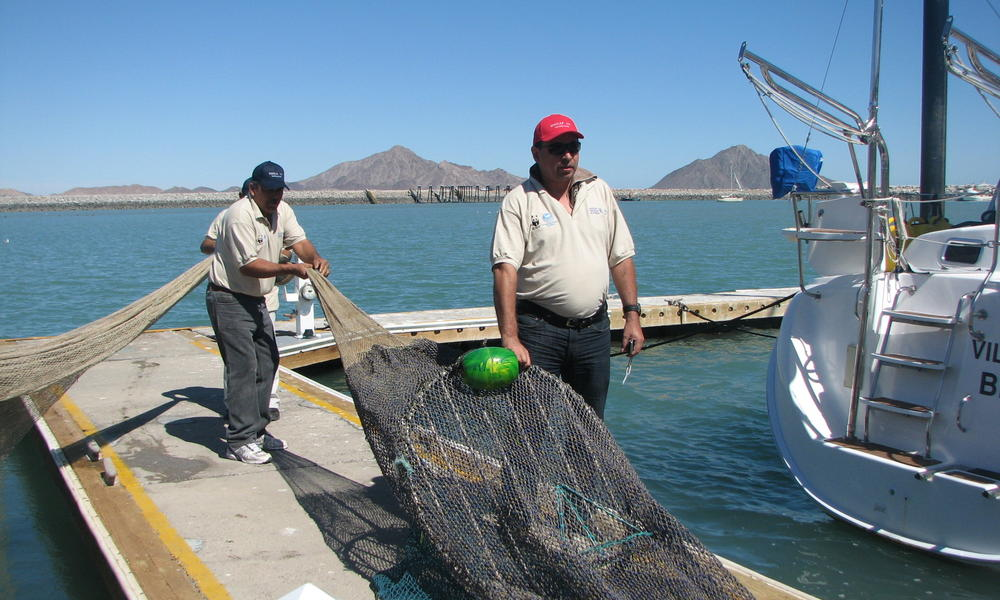 Gulf Of California Our Work Reducing Bycatch Testing