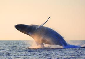 Whale landing hero 61029559
