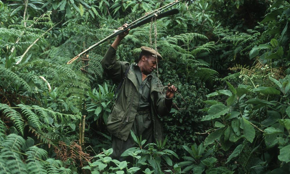 ranger in the DRC