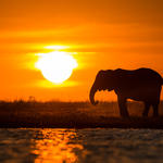 Namibia Elephant at sunset