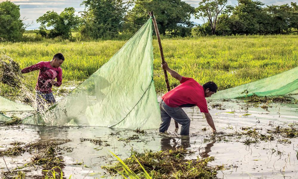 Orinoco River fishers