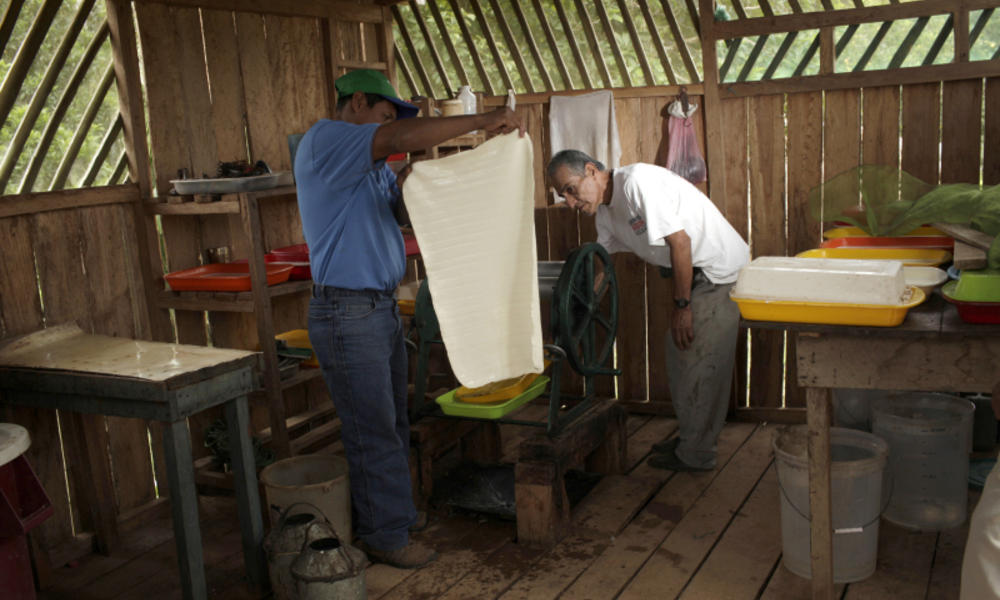 Eduardo presses latex sheets to dry them
