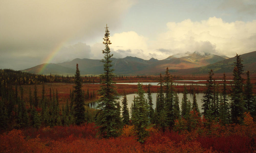 Fall colors and rainbow at Red Star Lake, Gates of the Arctic
