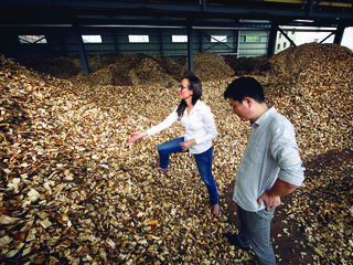 Freshly cut wood at a paper mill in Tengzhou, China