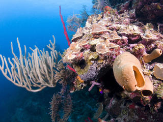 Colorful reef in Belize