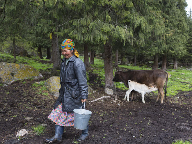 A woman walks away after milking her cow
