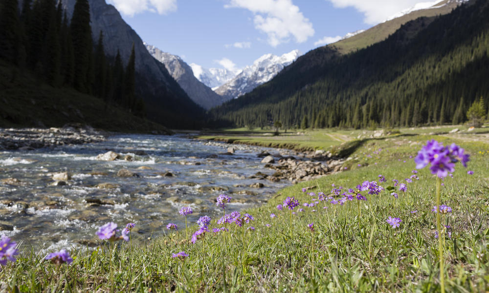 A stream and flowers in the mountains of Kyrgyzstan
