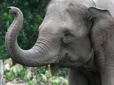Elephants 8.1.2012 whytheymatter1 hi 247511