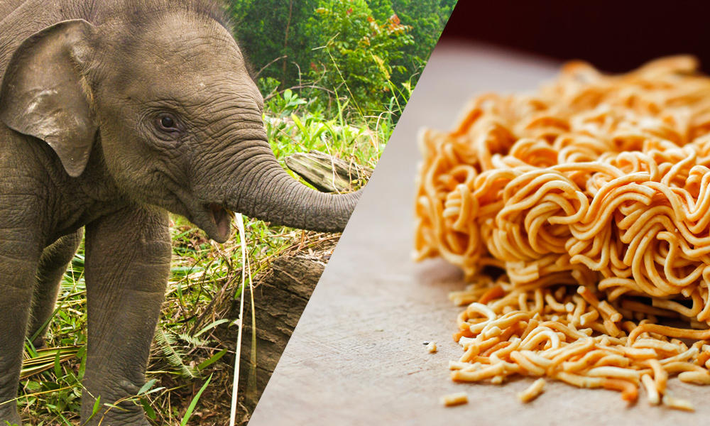 elephants and noodles