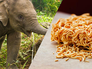590x480 Elephant Noodles Food Pairings