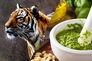 tiger and pesto