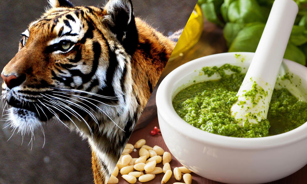 16 501 food pairings social %281000x600%29 tiger