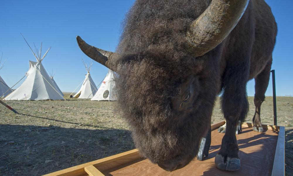 Tribal elders, singers, storytellers, educators, visiting biologists, and a veterinarian were among those who taught Fort Peck students.