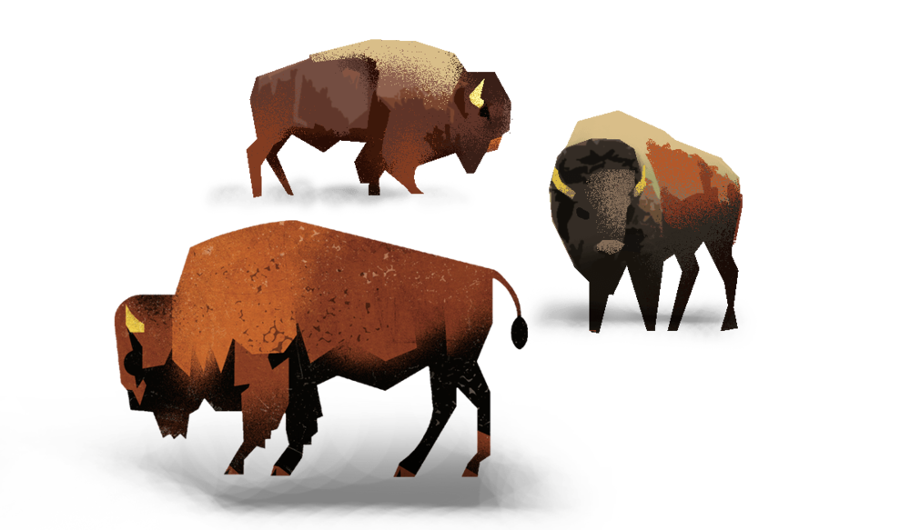 illustrated bison
