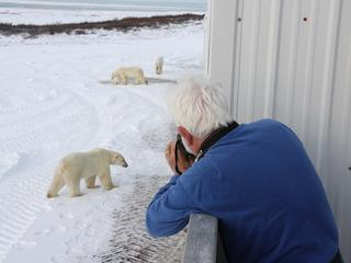 Photographing wild polar bears