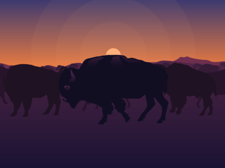 bison info slide 9 background