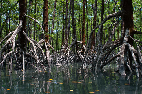 coastal mangroves